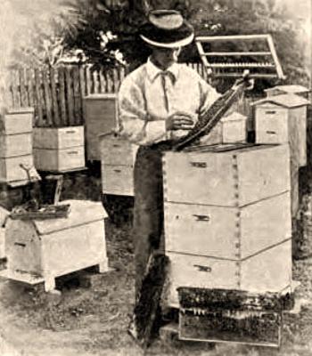sw Foto: Mann hantiert zwischen Bienenkästen