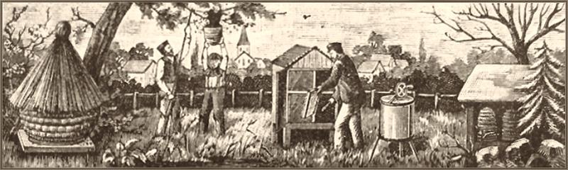 Kupferstich: beschäftigte Imker und verschiedene Bienenstöcke