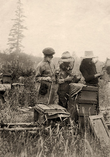 sw-Foto: drei Imker kontrollieren Bienenstöcke und Waben