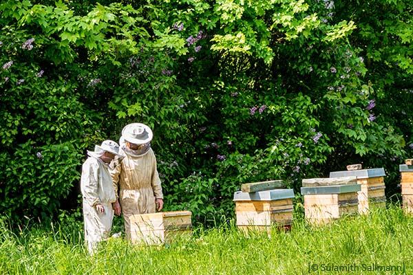 Farbfoto: zwei Imker kontrollieren Bienenstöcke