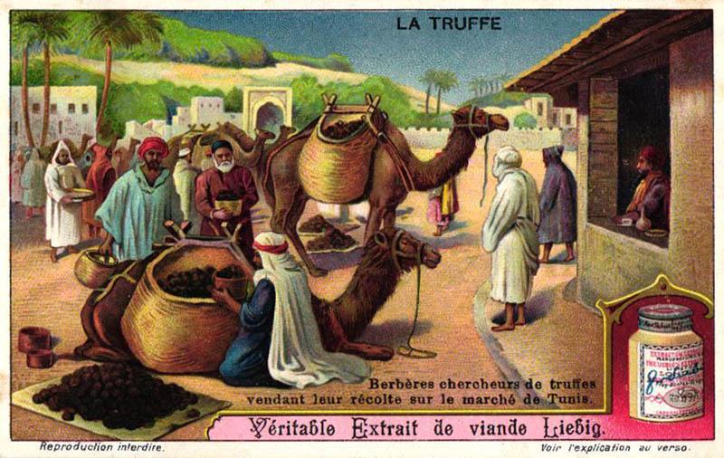 Sammelbild: Trüffel auf dem Berbermarkt
