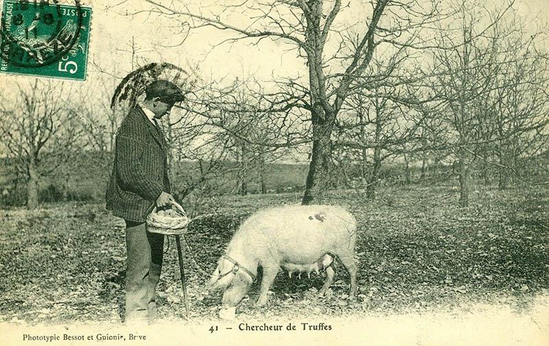sw-Foto: Trüffelsucher mit Schwein