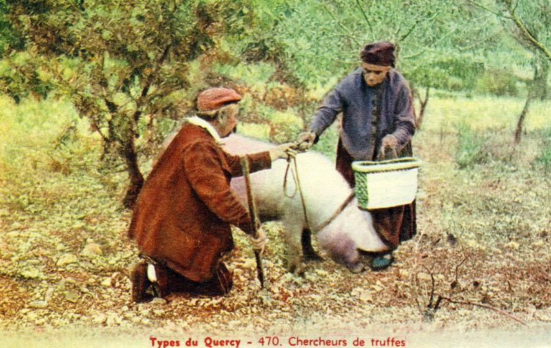 kolorierte AK: alter Mann und alte Frau mit Trüffelschwein