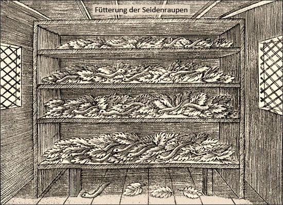 Kupferstich: Fütterung der Seidenraupen - 1695