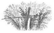 sw-illu: Pflanzen