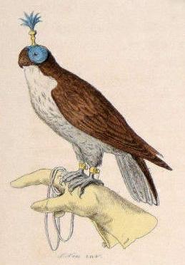 Zeichnung: Falke auf einer behandschuhten Hand