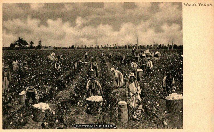 alte sw-Ansichtskarte: Baumwollarbeiter pflücken Baumwolle
